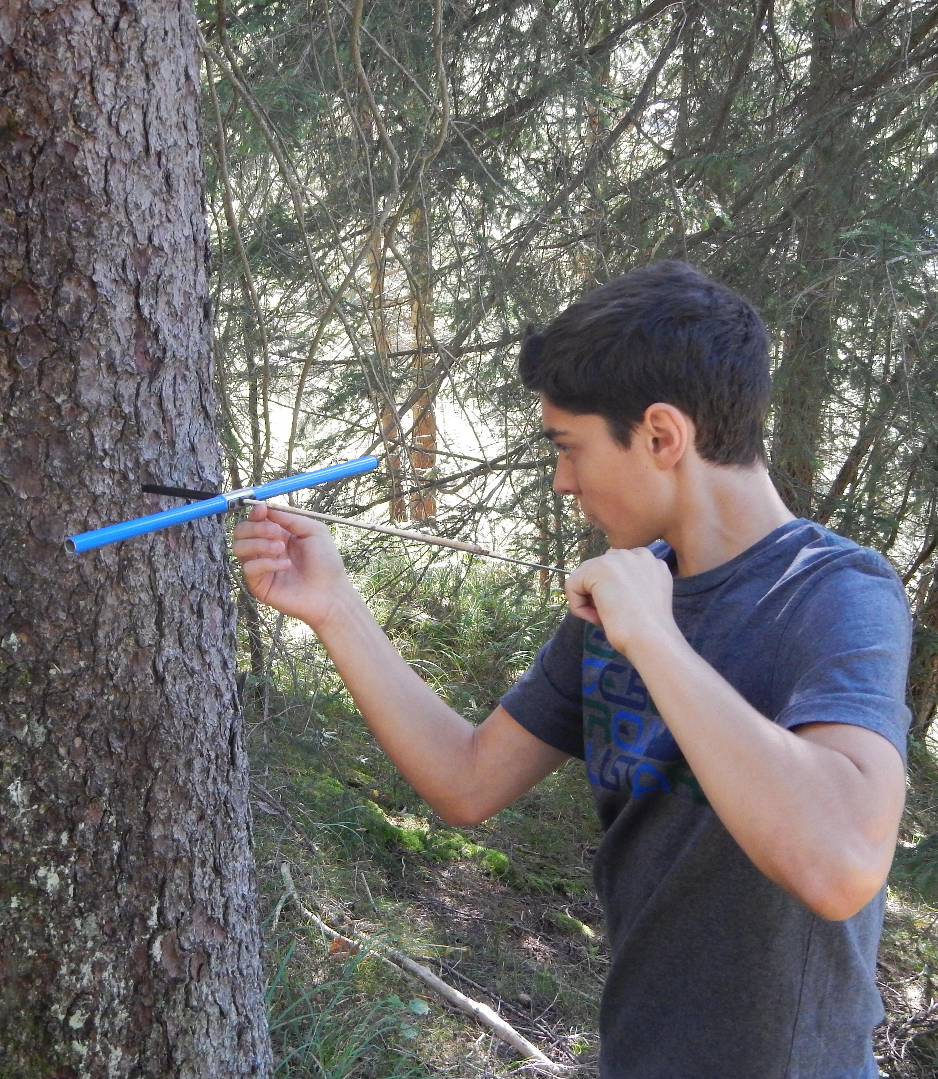 In den Baum geschaut